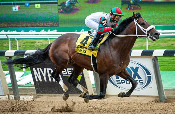 12 times a stakes winner, Firenze Fire is all racehorse