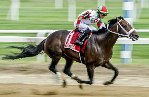 Barn Tour: Kelly Breen points Firenze Fire to the Breeders' Cup