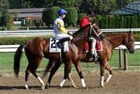 Forever d'Oro, Curlin Stakes