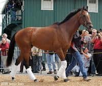 /horse/Barbaro