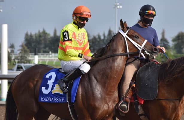 Haddassah (6-1) is the surprise winner of the Prince of Wales