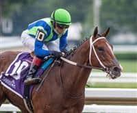 /horse/Jackies Warrior