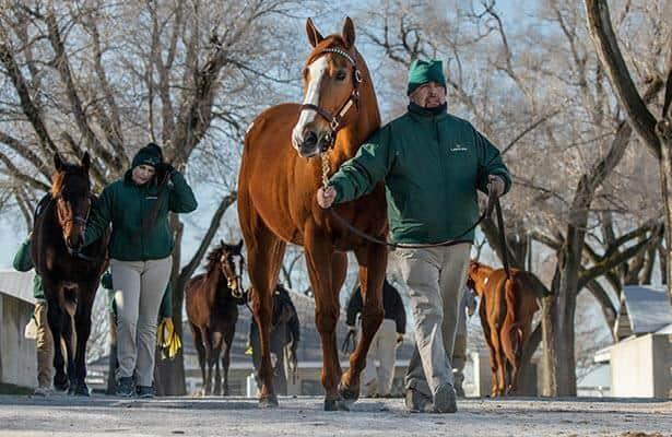 'Hot horses' may sell year-round on Keeneland's virtual platform