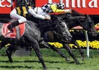Viewed winning the 2008 Emirates Melbourne Cup from Bauer