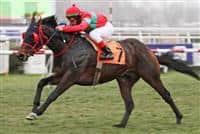 /horse/Zambian Dream