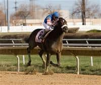 Musket Man captures the 2009 Illinois Derby