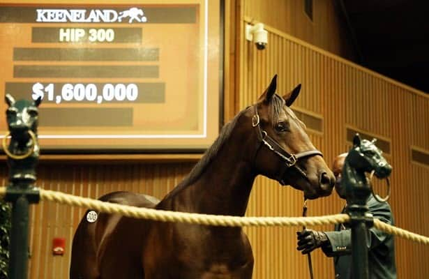 Sibling to Midnight Bourbon brings $1.6 million at Keeneland