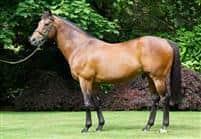 /horse/Danehill Dancer