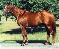 /horse/Eddington