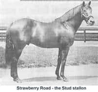 /horse/Strawberry Road