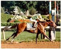 1990 Preakness winner Summer Squall