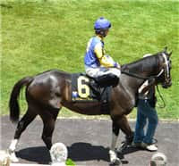Synchronicity Too in the paddock before the 1st race at Arlington on July 10, 2010