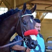 /horse/Bond Holder