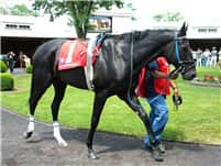 Unbridled Vicar in the paddock before the 4th race at Arlington on July 10, 2010