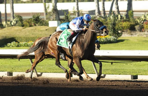 Varda wins Starlet after Princess Noor pulled up in stretch