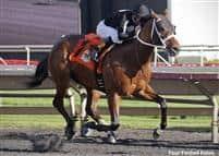 Wellabled wins the G3 Arlington-Washington Futurity Stakes at Arlington Park.